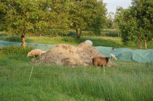 Unterstützung durch Schafe