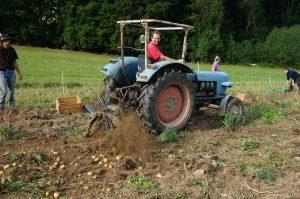Unterstützung durch Traktor_Kartoffelernte 2015