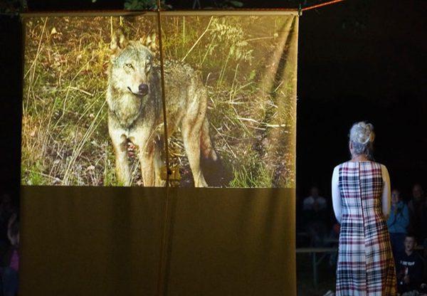 Canis Lupus – der Wolf